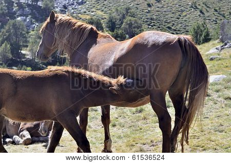 A horse with its colt
