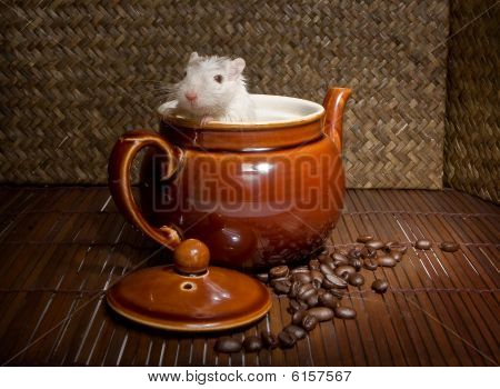 Coffee Rat