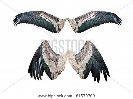Set Of Wing
