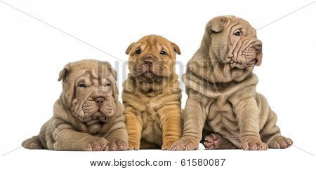 Front view of Shar Pei puppies sitting in a row, isolated on white