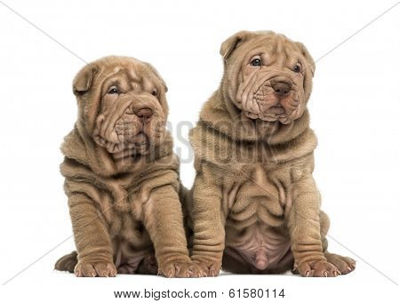 Two Shar Pei puppies sitting together, isolated on white