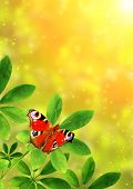 image of green caterpillar  - Summer frame with green leaves and butterfly - JPG