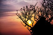 picture of siluet  - Ancient ruins and tree silhouette at sunset sky background in Hampi Karnataka India - JPG