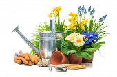 picture of horticulture  - Gardening tools and flowers isolated on white with copy space - JPG