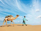 pic of camel  - Rajasthan travel background  - JPG