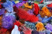 stock photo of carnivale  - closeup of a pile of feathers of different colors - JPG