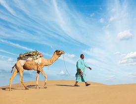 foto of camel  - Rajasthan travel background  - JPG