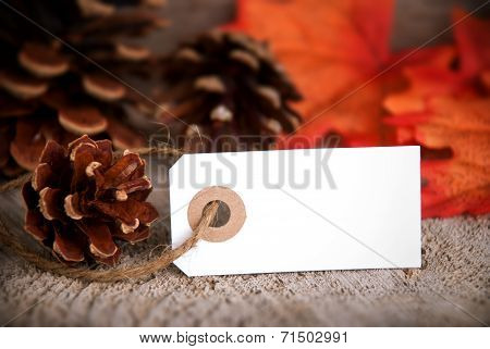 Autumn Background With Empty Label