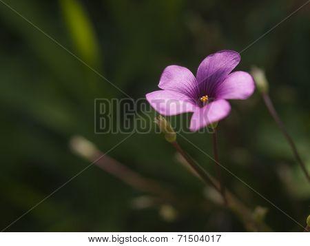 Shamrock Flower