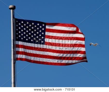 american flag and bird