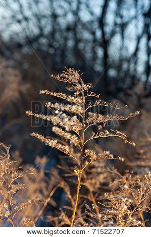 Sunlit Dry Blade