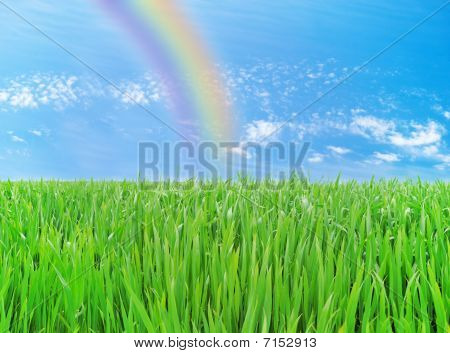 Meadow With A Young Green Grass And The Blue Sky With Clouds