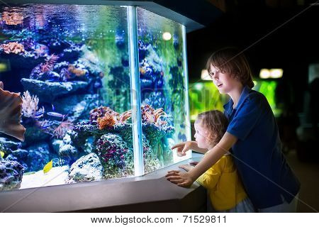 Brother And Sister Watching Fishes In A Zoo