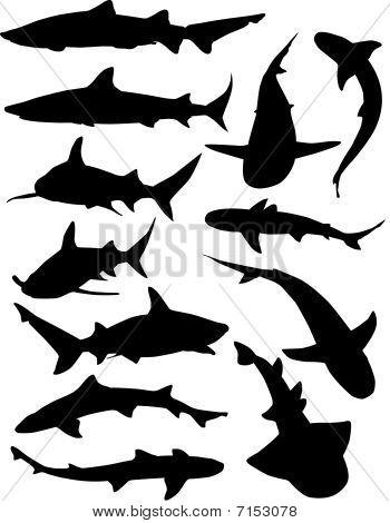 sharkSilhouettes