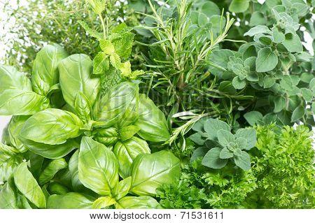 Closeup Variety Of Fresh Herbs