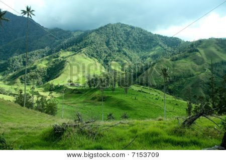 Cocora Valley And The wax Palm