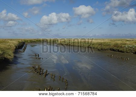 Westerhever (germany) - Salt Meadows With Ditch