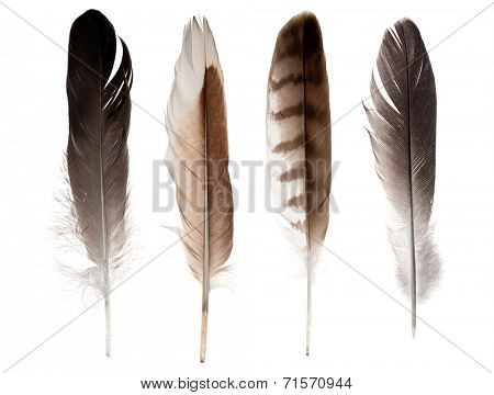 set of four straight feathers isolated on white background