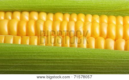 Fresh corn macro close up