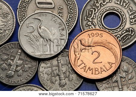 Coins of Malawi. Purple heron (Ardea purpurea) and paradise whydah bird (Vidua obtusa) depicted in Malawian tambala coins.