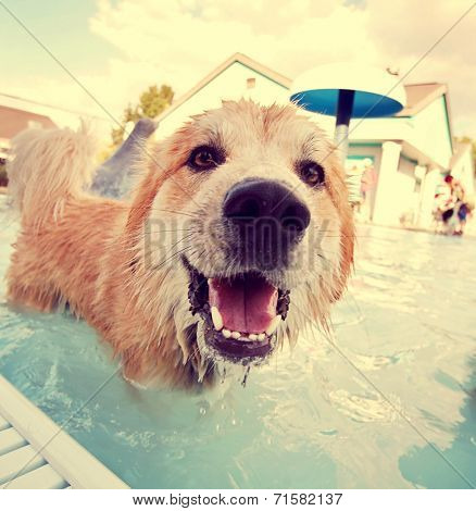a cute dog at a local public pool