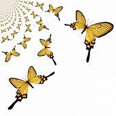 foto of mustering  - Digital painted Illustration of Butterflies in kaleidoscopic Pattern - JPG