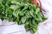 stock photo of sorrel  - Tuft of fresh sorrel in basket on wooden background - JPG
