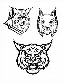 picture of bobcat  - Head logo of a wild bobcat or lynx for masot or wildlife design - JPG