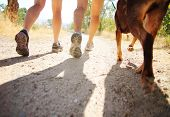 foto of pooch  - a dog out enjoying nature with two women - JPG