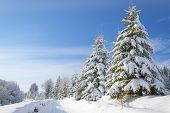 foto of snow clouds  - Winter landscape with high spruces and snow at dawn  - JPG