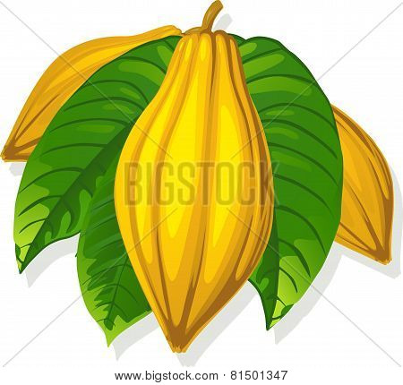 Cocoa Pod And Leaf - Vector Illustration
