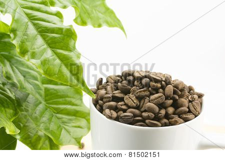 Coffee beans and leaf