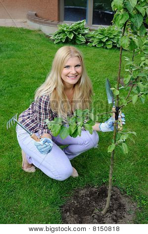 Pretty Gardener Woman With Gardening Tools Outdoors Planting Apple Tree