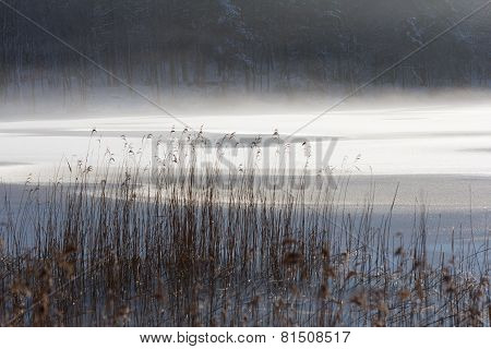 Grass in front of lake