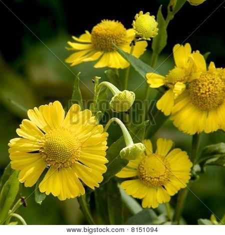 Vibrant Yellow Flowers