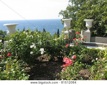 Rose garden near sea