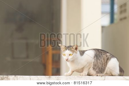 wild cat sitting on the wall
