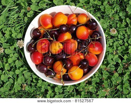 Bowl Of Fruit, Southern Bohemia