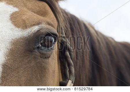 brown Horse eye horizontal