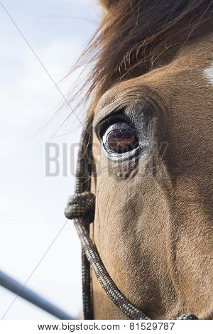 Horse eye on sky background