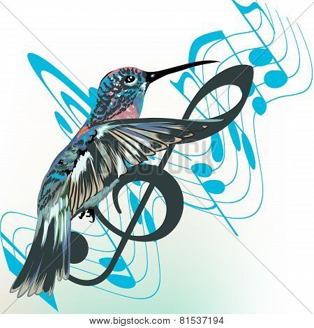 Music Background With Notes, Treble Clef And Hummingbird