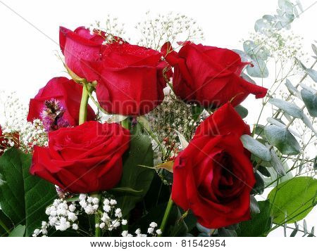 Six Red Roses Amid Green Leaves Babys Breath