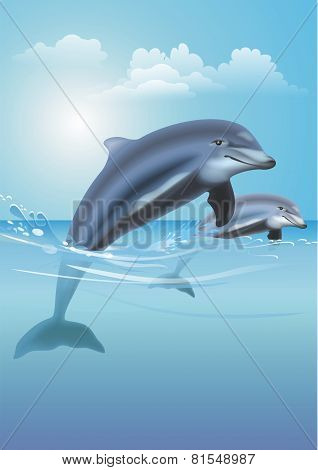 Jumping Dolphins Illustration