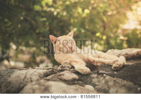 Cat Sleeping On Rock In Garden