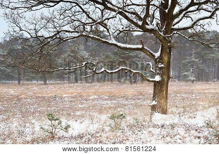 Tree On Meadow In Snowy Winter