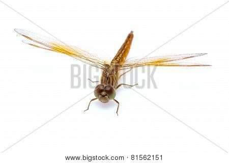 Yellow dragonfly isolated