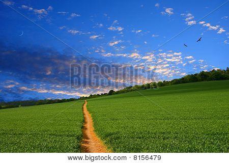 Straight Farmland Path