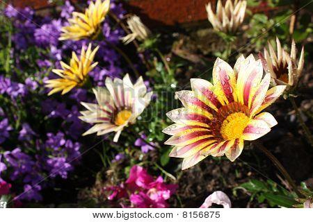 colour flowers