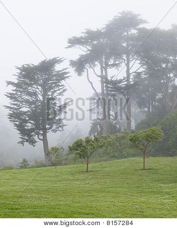Foggy Park in San Francisco