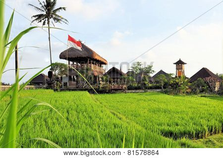 Huts in rice paddies near Ubud, Bali, Indonesia